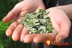 V máji majú najväčšiu silu: Odtrhnite si tento mesiac pár malinových listov a len zalejte - toto je najlepší pomocník každej ženy! How To Dry Basil, Herbs, Leto, Minion, Food, Alcohol, Essen, Herb, Minions