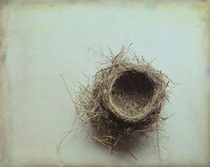 Empty Nest print