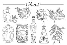 Olive Oil, Olive Branch Hand drawn by TopVectors on Pencil Illustration, Graphic Illustration, Illustrations, Creative Sketches, Art Sketches, Olives, Paint Markers, Painting Patterns, Vintage Colors