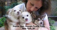 Sophie Mae, Georgia Peach and Yoda