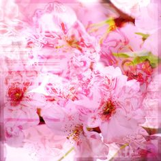 I´m into pink right now ;-) Fine art photograph of Japanese cherry blossoms.