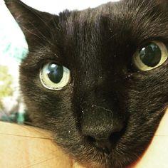 Spot the cat is feeling better. @msbookish will glad to hear. #catsofinstagram @unbreakablekierapeacock