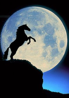 Would be a great mural for my oldest daughter's room-she's fanatic about horses … - Pferd Pretty Horses, Horse Love, Beautiful Horses, Animals Beautiful, Horse Photos, Horse Pictures, Horse Wallpaper, Horse Silhouette, Beautiful Moon