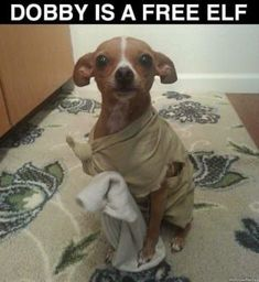 Harry Potter has given the world,a source of puns and memes. A post to bring to you some the 'funniest' from the world of Harry Potter. Funny Animal Memes, Funny Animal Pictures, Cute Funny Animals, Cute Baby Animals, Funny Dogs, Cute Dogs, Funny Memes, Elf Funny, Hilarious