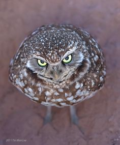 500px / Angry Bird by Tin Man.  He's not smug, but he could be his own emoticon