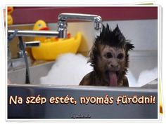 Monkey Bathtime - Squee daily at these cute animals and the absolute cutest animal pics and gifs ever known to man. Baby Animals, Funny Animals, Cute Animals, Jose Mota, Wild Animals Videos, Exposed Video, Les Gifs, Gif Animé, Good Humor