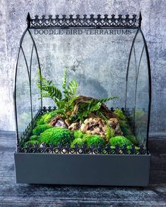 Terrarium with moss and ferns by Doodle Bird Terrariums Moss terrarium Moss-terr... -  world -  Terrarium with moss and ferns by Doodle Bird Terrariums Moss terrarium Moss-terrarium Bonsai trees Apartment gardening House plants Gardening Indoor gardening Succulent plants Succulents garden Succulent planters Indoor house plants Succulent terrarium Cactus Hanging planters Cactus plants Hanging plants  - Closed Terrarium Plants, Succulent Terrarium, Succulent Ideas, Bottle Garden, Glass Garden, Indoor Mini Garden, Indoor Gardening, Gardening Tips, Plant In Glass