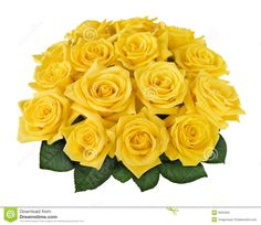 Yellow Rose Bouquet Cutout - Download From Over 54 Million High Quality Stock Photos, Images, Vectors. Sign up for FREE today. Image: 3933450