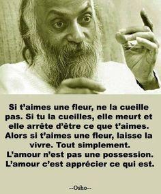 L'amour c'est apprécier ce qui est. #citation #citationdujour #proverbe #quote #frenchquote #pensées #phrases #amour