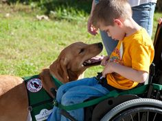 Regulation for service dogs in classrooms is approved