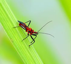 Insects are some of the shortest-living creatures on Earth actually. Whereas some of the previous creatures can live for hundreds of years, these things are lucky to survive even one year or the season! Aqua Culture, Urban Farming, Aquaponics, Pet Supplies, Insects, Diets, Animals, Netherlands, Creatures