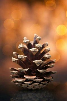 Mountain pinecone