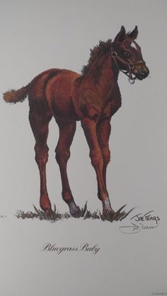 1977 Signed Limited Ed Joe Fears Bluegrass Baby Racehorse Pony Colt Art Print #Realism