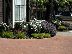 Drought tollerant street side plantings