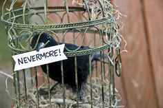 Nevermore, Halloween crow/cage decor