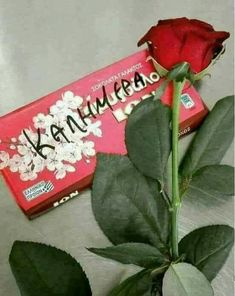 Graffiti Quotes, Beautiful Pink Roses, Mom And Dad, Good Morning, Messages, Emoji, Friends, Google, Photography
