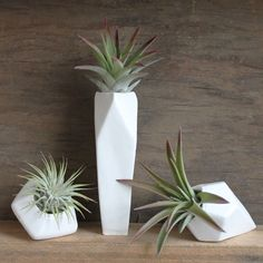 Petit pot de fleur pour exhiber ses plantes aériennes avec raffinement Plus