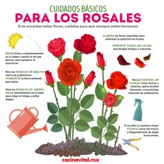 If you want to have an amazing rosebush care to perfection, we invite you to check these tips incredible! You know how to water them, prune them and more. Eco Garden, Herb Garden Design, Home Vegetable Garden, Fruit Garden, Garden Care, Garden Plants, Rose Care, Plant Decor, Beautiful Gardens