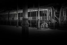 Dog at Terminal - Sirkeci Train Station Istanbul TURKEY