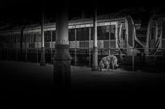 Dog at Terminal - Sirkeci Train Station Istanbul TURKEY