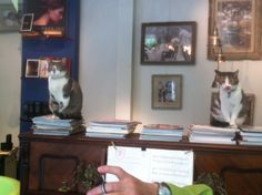 #brunolienard @Bruno Liénard @Laurent Dufourg mes chats Telma & Louise sur leur perchoir le piano de mon salon de coiffure! Et moi qui coupe les cheveux le petit doigt en l'air! @brunoracontemoitesciseaux