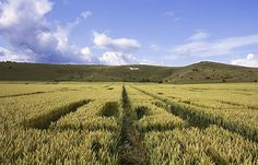 Great Inside View Of A Crop Circle