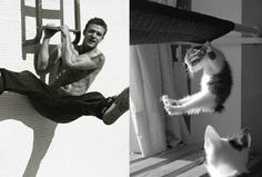27 Cats Who Could Clearly Be MaleModels