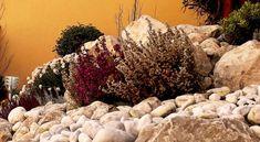 rock garden-sziklakert