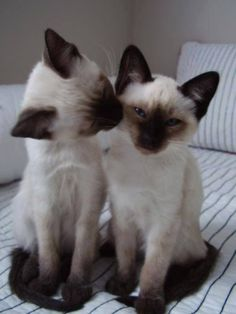 "* * KITTEN ON LEFT: "" Looks likes me can'ts wash de chocolate off yer face either."""