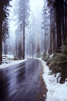 Sequoia NP, California catnahat