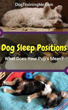dog sleep positions