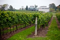 Flat Rock Cellars is a five-level gravity flow winery surrounded by 80 acres of vineyards on the Twenty Mile Bench in Jordan, Ontario. Niagara Region, Flat Rock, Wine Design, Wineries, Wine Country, Niagara Falls, Bordeaux, Ontario, Acre