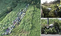 How Fukushima exclusion zone has become an overgrown wilderness | Daily Mail Online