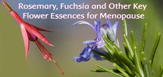 Key Flower Essences for Use During Menopause