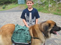 Amazing we could find a back pack big enough for him. now he can carry his own stuff!