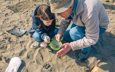 Was ist Mikroplastik und wie entsteht es? Wie gefährlich ist Mikroplastik für den Menschen? Was können wir gegen Mikroplastik tun? Flora Und Fauna, Nature, Foods, People, Naturaleza, Nature Illustration, Off Grid, Natural