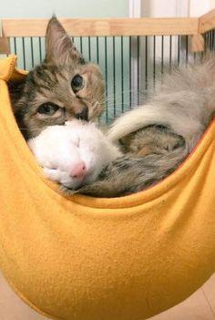 This kitten and ferret are hammock buddies.