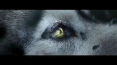 Lone Wolf Amazing Motivational  Video - YouTube I'm a fucking wolf! Don't you forget. I had and lost more in this than most. I'm strong I'm so fucking andgry but I gonna quit, first makes easier. That's me I did ny steel that I just know it. I always have, can't quit. And fucking starving. But it's to be this alone. But i will make it and I will come back and just lion I will eat evythinh atound because I was left. When should held. I swear I'm fucking crawling insulide. Hateme, love me,