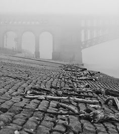 """Washed Ashore""  St. Louis' cobblestone levee on a recent foggy morning,  with the historic Eads Bridge in the background."