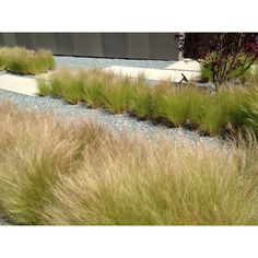 Grasses - use cement pads, pea gravel & grasses east side of house by garden