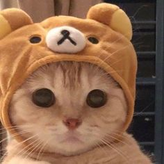 Cute Baby Cats, Cute Little Animals, Cute Cats And Kittens, I Love Cats, Kittens Cutest, Cute Dogs, Cute Cat Wallpaper, Beautiful Wallpaper, Cute Cat Memes