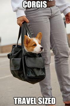 There is plenty more corgi cuteness where that came from. Just click the corgi in the bag! #cute #corgi