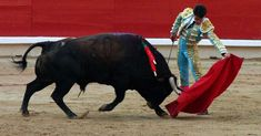 stop bullfighting in spain
