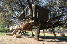 Casa en el árbol enraizada / Urbanarbolismo
