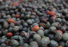 Multicoloured peppercorns from Jordan