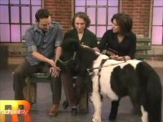 Miniature horses as Guide animals for the blind.....awesome!