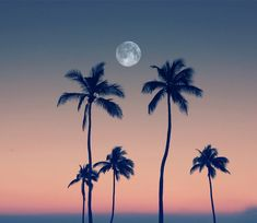The moon rises between the palm trees on Fort Lauderdale Beach. (Photo by Stella Oliver) #FortLauderdale