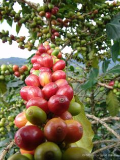 Coffe from Colombia.