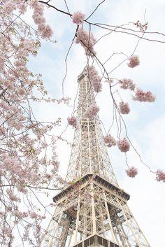 Photographie de Paris, la saison des cerisiers en fleurs, Pretty in Pink, Paris dans la décoration de printemps, rose Cherry Blossoms, Tour Eiffel, Paris