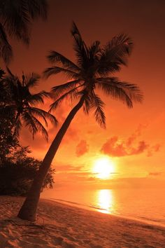 Fotobehang: Palmboom, Strand, Zonsondergang